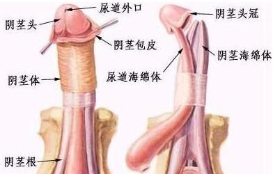 男性尿道炎不吃药能好吗